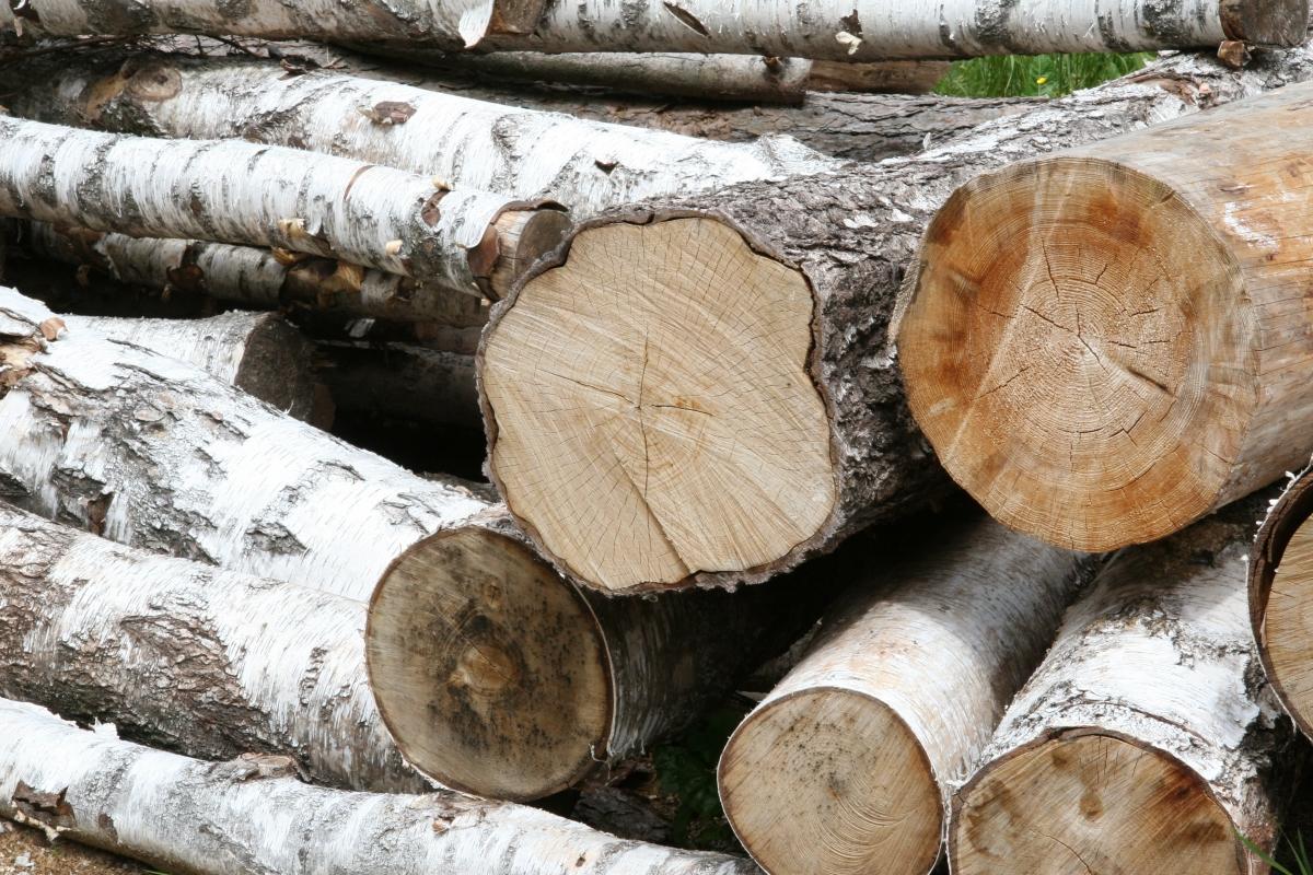 Lesní hospodářství v ČR trpí stejnými neduhy jako zemědělství