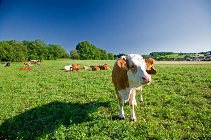 Další sociálně-potravinářské inženýrství současné vlády: mléko do škol